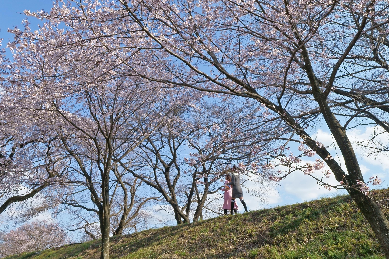 広角レンズでとらえた桜の木