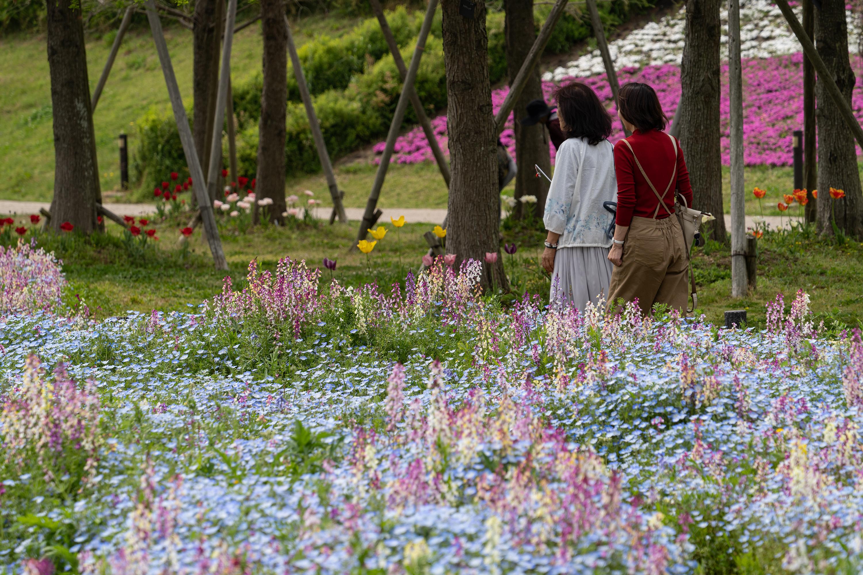 ネモフィラとリナリアの花畑